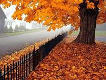 autumn quotes, quotes about autumn, autumn quotations, autumn picture, fall quotes, fall pictures,