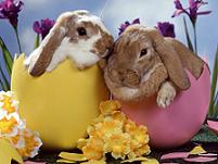 easter quotes, easter quotations, quotes for easter, quotes about easter, easter quote, happy easter, easter, holiday quotes, easter bunny,