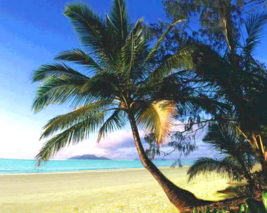 picture of palm trees, palm trees, favorite inspirational quotes, inspirational quotes, inspirational quotations, inspirational forum,